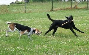 Fall River MA Dog Bite Attorney  Fall River MA Dog Bite Attorney Fall River MA Dog Bite Attorney