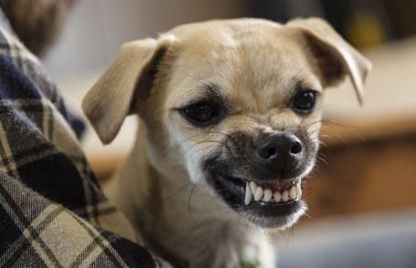 providence dog bite attorney Who Should Be Held Liable For A Dog Bite Injury? Who Should Be Held Liable For A Dog Bite Injury? Image005