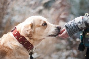 Who Should Be Held Liable For A Dog Bite Injury?