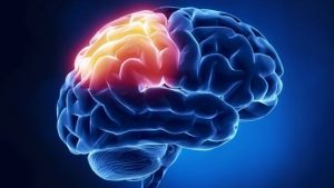 new bedford brain injury attorney new bedford brain injury attorney New Bedford Brain Injury Attorney: Prevention, Treatment for TBI image5 6