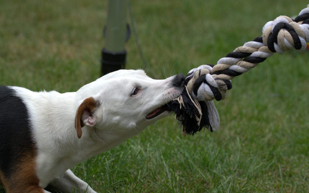 WHAT GOES INTO SETTLING A DOG BITE INJURY CLAIM IN NEW BEDFORD, MA?
